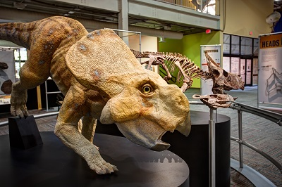 Dinosaur Discoveries: Ancient Fossils, New Ideas, an engaging exhibition  that reveals what living, breathing dinosaurs were really like, is set to  open at ...